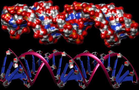 nucleic-acid