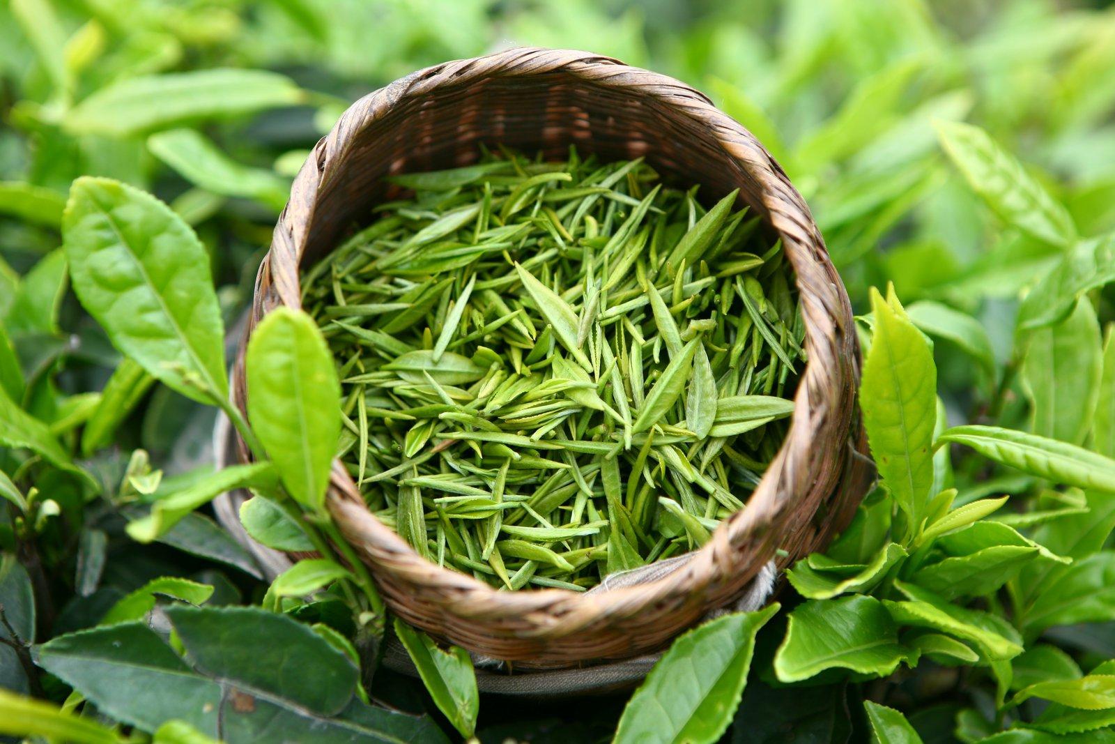 zelenyj-chaj-pri-gipertonii-mozhno-ili-net-2