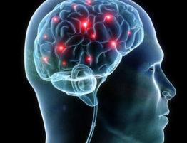 synapse-brain