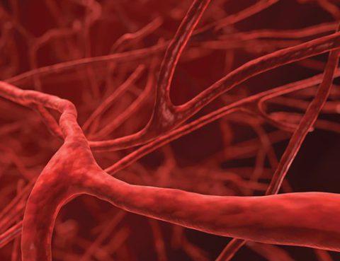blood_vessel_network